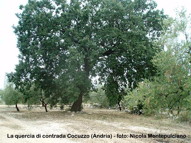 La-quercia-di-contrada-Cocuzzo-Andria