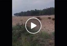 Terremoto, un parroco andriese presta soccorsi ad Amatrice: il VIDEO di Sky svela dettagli drammatici