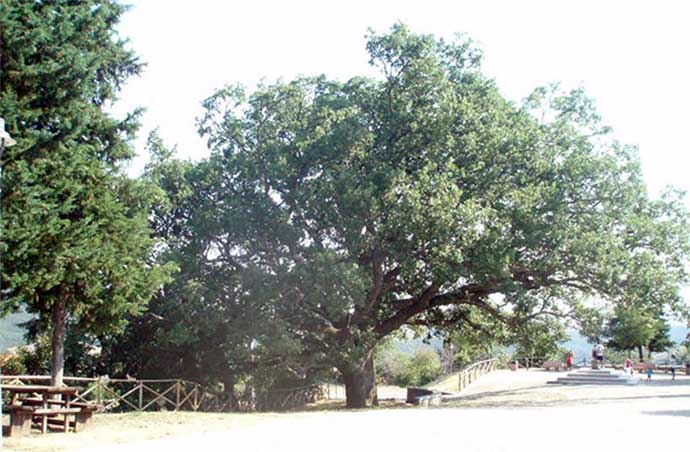 quercia-troianelli