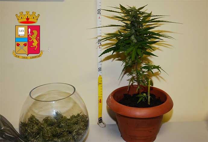 sequestro-marijuana-andria