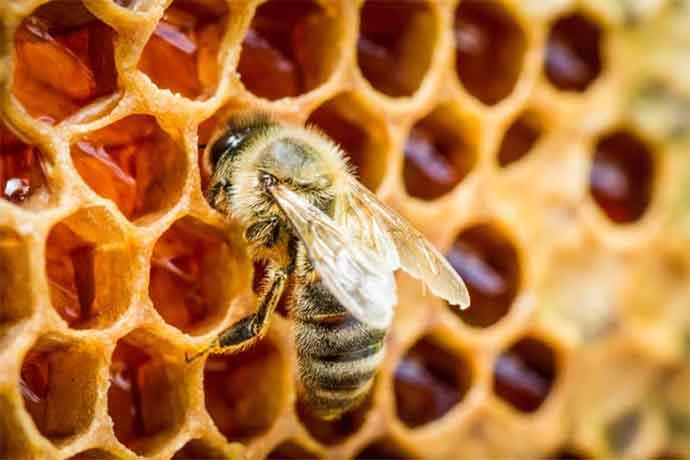 miele-apicoltura-apepg