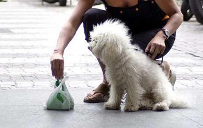 Per gli andriesi che ancora non l'hanno capito: raccogliere la cacca dei  cani è obbligatorio