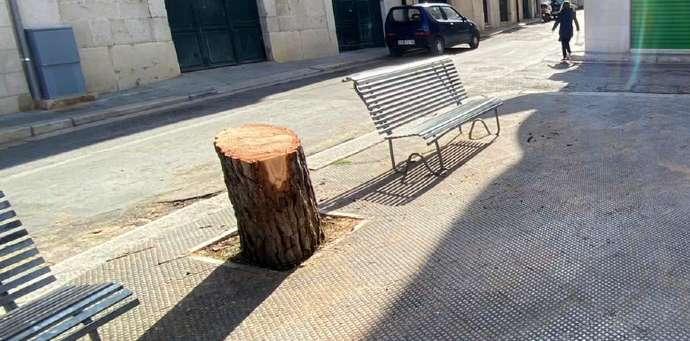 alberi abbattuti piazza sorelle agazzi Andria