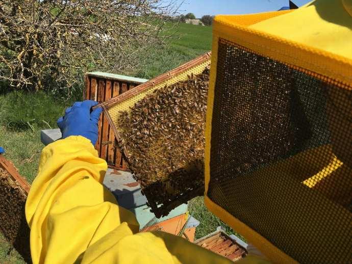 apicultura alta murgia