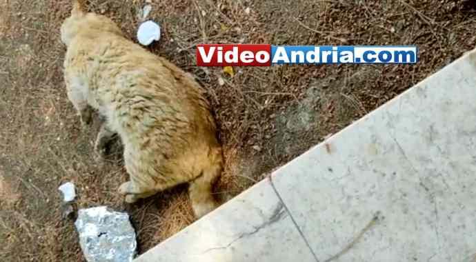 gatto morto andria via bari