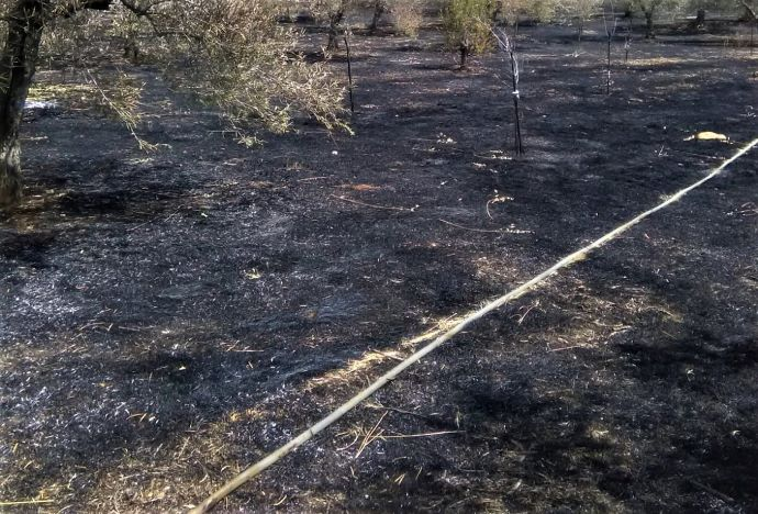 Incendio ad Andria, in fumo 1000 alberi di ciliegie, prugne e olivi 2
