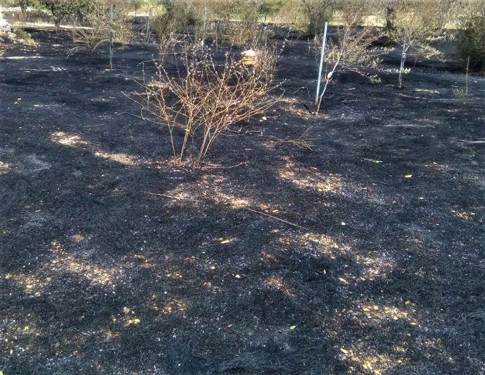 Incendio ad Andria, in fumo 1000 alberi di ciliegie, prugne e olivi 3
